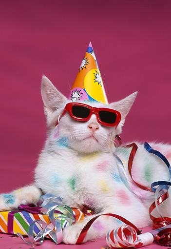 CAT 03 RK1145 07 © Kimball Stock Colorful Kitten Wearing Party Hat And Sunglasses With Decorations