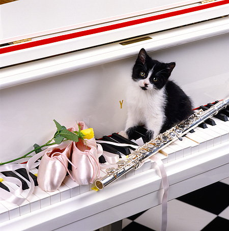 CAT 03 RK1261 06 © Kimball Stock Black And White Kitten On Piano Keys With Ballet Shoes And Flute