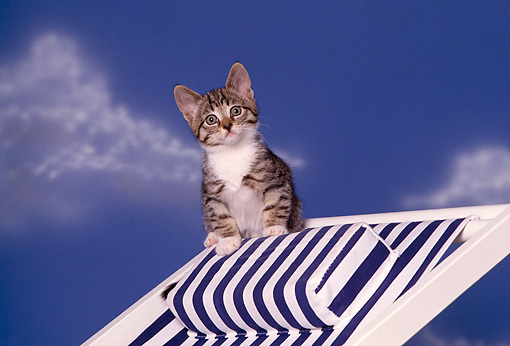 CAT 03 RK1585 06 © Kimball Stock Tabby Kitten Sitting On Blue And White Beach Chair Blue Sky Background
