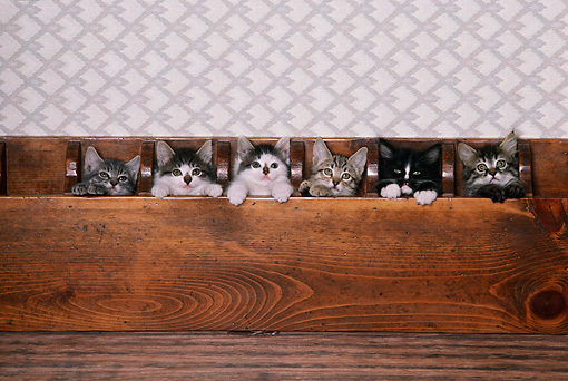 CAT 03 RK1760 04 © Kimball Stock A Group Of Kitten Sitting In Wooden Box Peeking Over