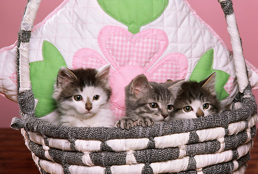 CAT 03 RK1775 04 © Kimball Stock Three Kittens Sitting In Basket With Flower Pillow