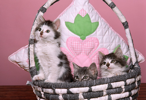 CAT 03 RK1775 08 © Kimball Stock Three Kittens Sitting In Basket With Flower Pillow