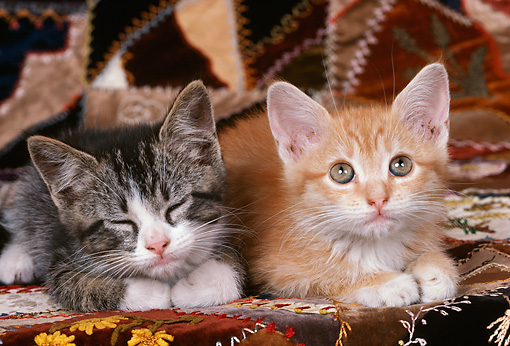 CAT 03 RK1821 01 © Kimball Stock Head Shot Of Gray And Orange Kittens Laying On Quilt Background