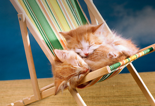 CAT 03 RK1860 10 © Kimball Stock Two Orange Kittens Sleeping On Beach Chair