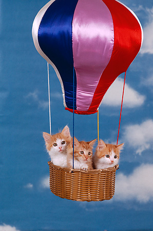 CAT 03 RK2233 11 © Kimball Stock Three Orange And White Kittens Sitting In Hot Air Balloon Clouds Blue Sky