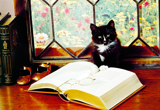 CAT 03 RK2373 10 © Kimball Stock Black And White Kitten Sitting On Table By Window Books And Glasses