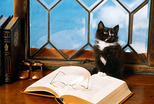 CAT 03 RK2376 73 © Kimball Stock Black And White Kitten Sitting On Table By Books Glasses Blue Sky