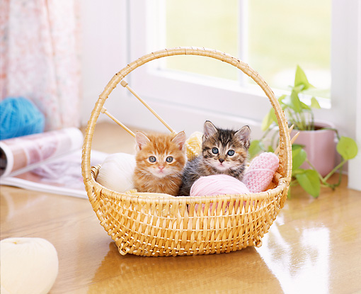 CAT 03 YT0012 01 © Kimball Stock Two Tabby Kittens Sitting In Wicker Basket With Yarn