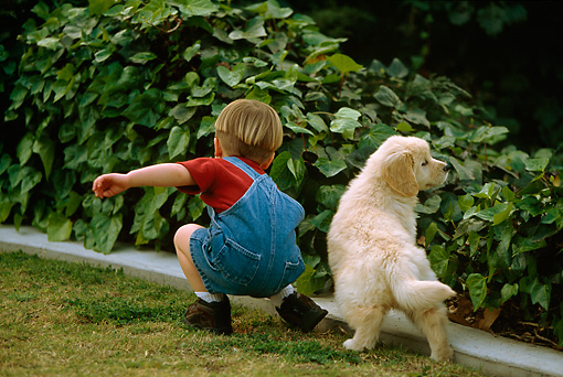 CHD 01 DB0001 01 © Kimball Stock Young Boy Playing With Golden Retriever Puppy