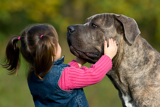 CHD 06 KH0002 01 © Kimball Stock Little Girl Holding Face Of Cane Corso Dog