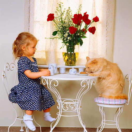 CHD 07 RS0002 01 © Kimball Stock Little Girl Having Tea With Cat At Table