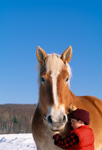 CHD 08 LS0001 01 © Kimball Stock Boy Standing By Belgian Horse Snow Blue Sky Vermont
