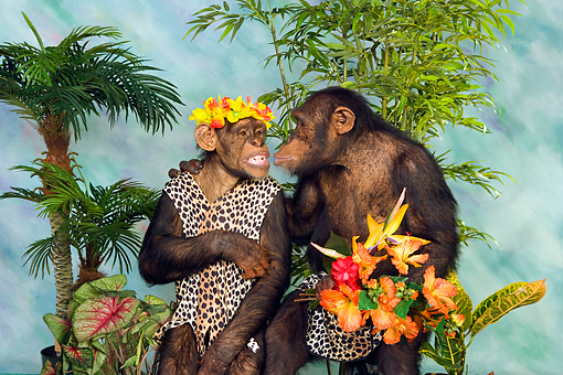 CHI 03 RK0177 01 © Kimball Stock Jungle Love
