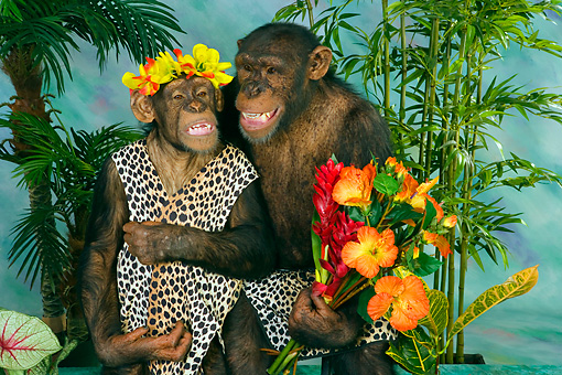 CHI 03 RK0178 01 © Kimball Stock Jungle Love
