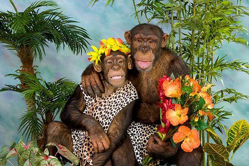 CHI 03 RK0179 01 © Kimball Stock Jungle Love