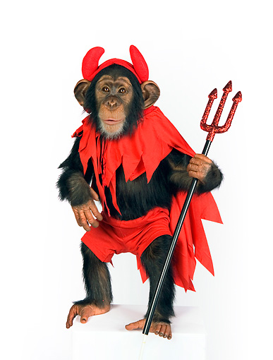 CHI 03 RK0204 01 © Kimball Stock Young Chimpanzee Wearing Devil Costume On White Seamless