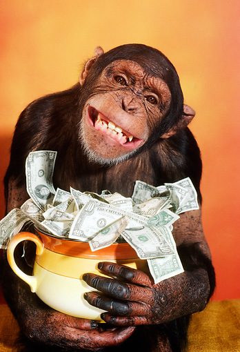 CHI 03 RC0005 01 © Kimball Stock Humorous Chimpanzee Holding Pot Of Money
