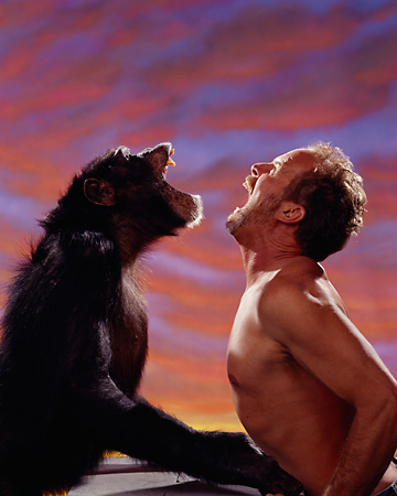 CHI 03 RK0001 12 © Kimball Stock Profile Of Chimpanzee And Man Screaming At Each Other