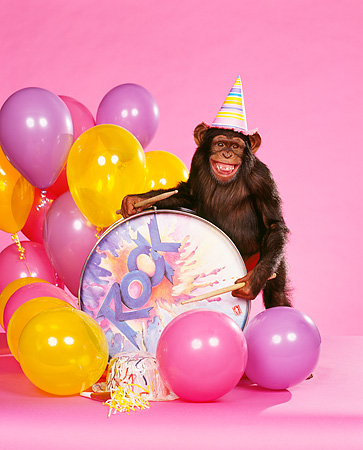 CHI 03 RK0022 06 © Kimball Stock Humorous Shot Of Eddie Wearing Party Hat Leaning On Drum Smiling With Sticks By Balloons Pink Seamless Background