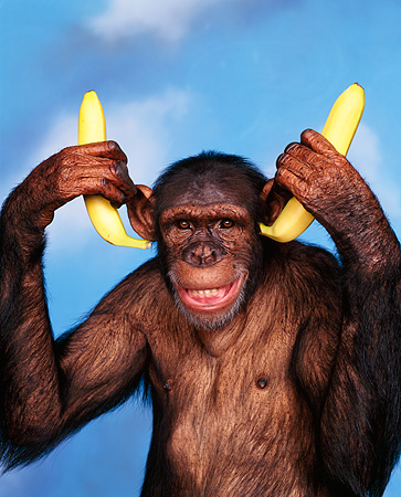 CHI 03 RK0054 01 © Kimball Stock Humorous Shot Of Sally Putting Bananas In Ears Smiling Blue Clouds Background