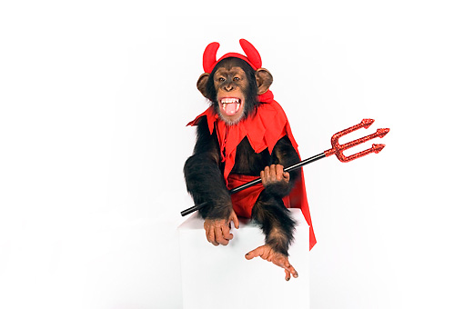 CHI 03 RK0203 01 © Kimball Stock Young Chimpanzee Wearing Devil Costume Sitting On Box On White Seamless