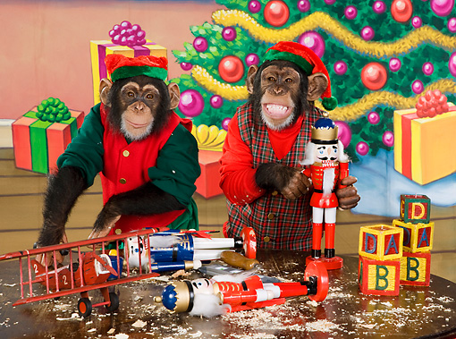 CHI 03 RK0264 01 © Kimball Stock Humorous Elf Chimpanzees Making Toys: Santa's Helpers