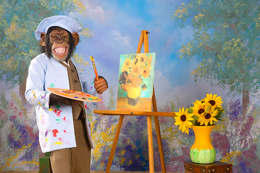 CHI 03 RK0273 01 © Kimball Stock Humorous Chimpanzee Painting A Still Life Of Yellow Flowers: Vincent Van Chimp