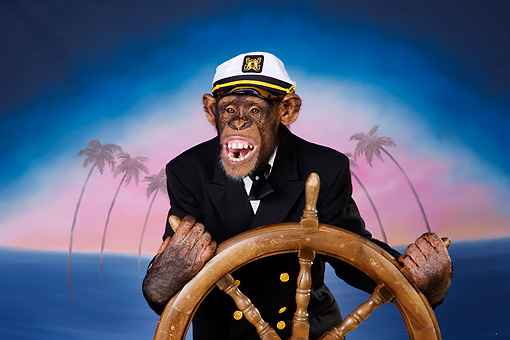 CHI 03 RK0278 01 © Kimball Stock Humorous Captain Chimpanzee Piloting Ship: Captain Chimp