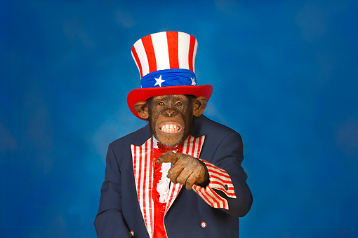 CHI 03 RK0286 01 © Kimball Stock Humorous Uncle Sam Chimpanzee Pointing
