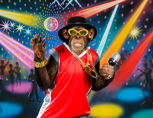 CHI 03 RK0294 01 © Kimball Stock Humorous Rapping Chimpanzee: Chimp-MC