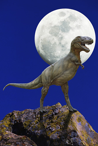DIN 01 GL0001 01 © Kimball Stock Tyrannosaurus Rex Standing On Boulder With Moon In Background