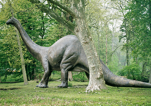 DIN 01 GL0005 01 © Kimball Stock Diplodocus Standing In Forest
