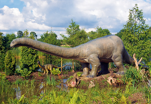 DIN 01 WF0003 01 © Kimball Stock Apatosaurus Standing By Water With Young
