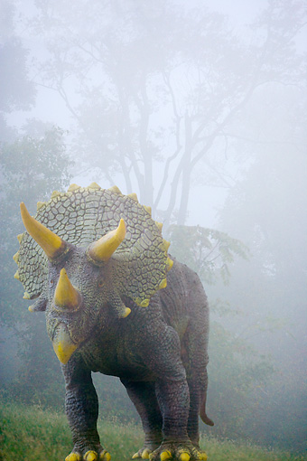 DIN 01 JZ0001 01 © Kimball Stock Triceratops Standing In Fog