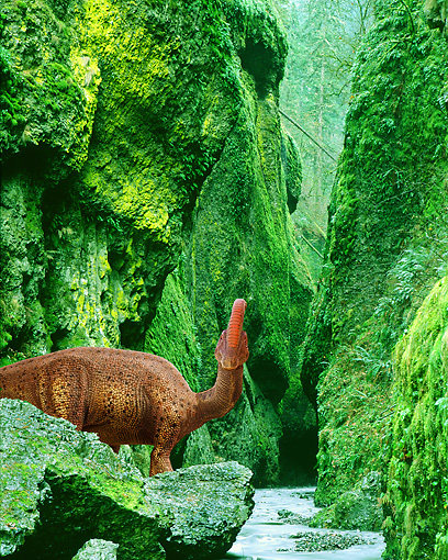 DIN 01 JZ0003 01 © Kimball Stock Parasaurolophus Standing In Gorge