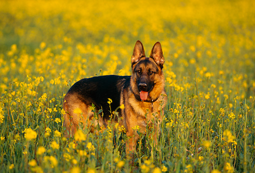 Image result for german shepherd flowers