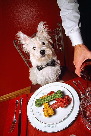 DOG 02 RD0004 01 © Kimball Stock West Highland Terrier Fine Dining