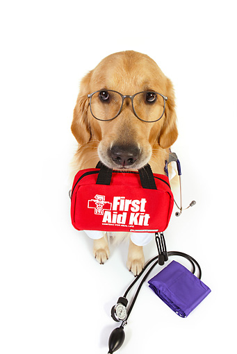 DOG 03 RK0483 01 © Kimball Stock Golden Retriever Dressed Like Doctor With First Aid Kit In Mouth Sitting On White Seamless
