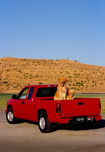 DOG 03 RK0386 12 © Kimball Stock Two Golden Retriever Sitting In Back Of Red Truck
