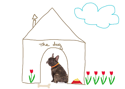 DOG 05 JE0006 01 © Kimball Stock French Bulldog Sitting Inside Drawing Of A Doghouse