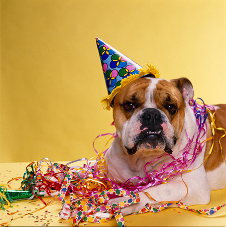 Party Hat Animal Stock Photos Kimballstock
