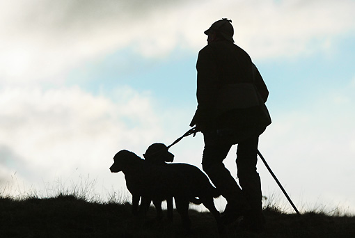 DOG 06 NR0038 01 © Kimball Stock Silhouette Of Hunter With Two Dogs Walking In Field