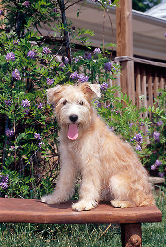 DOG 07 CE0002 01 © Kimball Stock Mixed Breed Dog Sitting On Bench In Garden