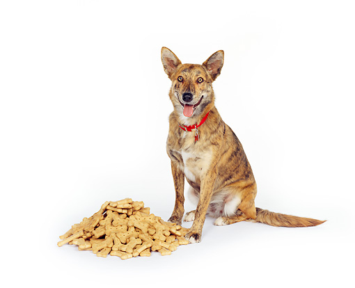 DOG 07 RK0034 03 © Kimball Stock Mixed Breed Sitting Next To A Pile Of Dog Treats On White Seamless