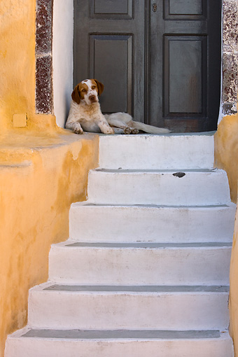 DOG 07 KH0004 01 © Kimball Stock Mixed Breed Greek Dog Laying In Front Of Doors At Top Of Stairs