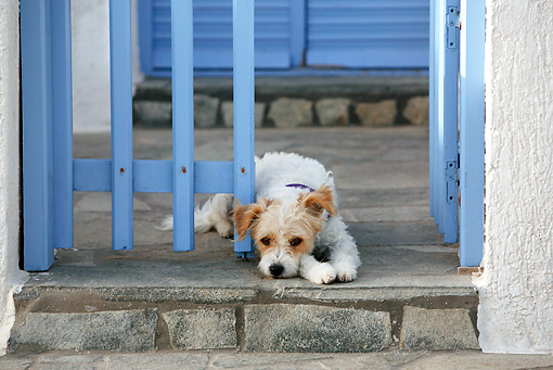 DOG 07 KH0011 01 © Kimball Stock Mixed Breed Greek Dog Laying On Porch By Blue Gate