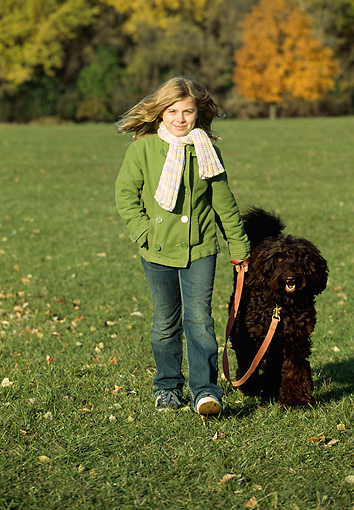 DOG 07 LS0001 01 © Kimball Stock Australian Labradoodle Walking On Leash With Girl