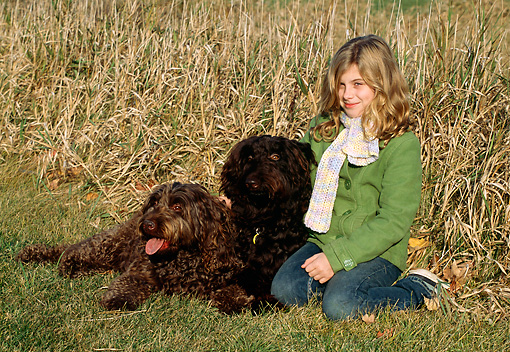 DOG 07 LS0002 01 © Kimball Stock Two Australian Labradoodles Sitting With Girl By Dry Grass