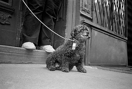 DOG 07 MQ0029 01 © Kimball Stock Mixed Breed Dog On Leash Sitting On Pavement Manhattan New York
