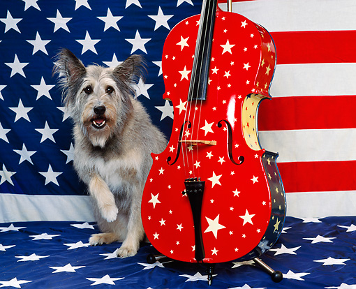 DOG 07 RK0296 02 © Kimball Stock Mixed Breed Sitting Next To American Cello